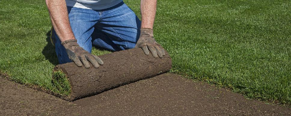Технология выращивания рулонный газон 33